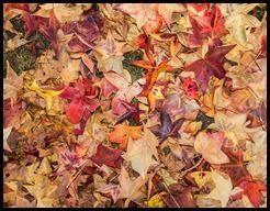 Chaves Outono 13
