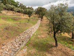 Tongobriga Ruinas Romanas 15